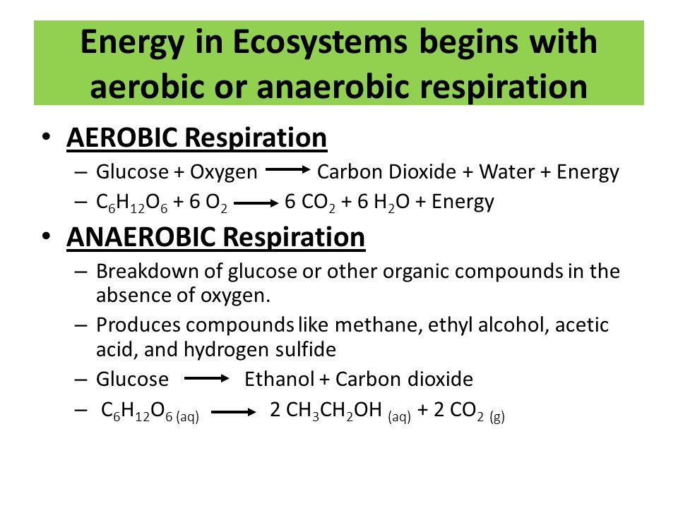 Energy in Ecosystems begins with aerobic or anaerobic respiration AEROBIC Respiration – Glucose + Oxygen Carbon Dioxide + Water + Energy – C 6 H 12 O