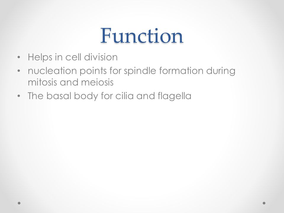 Function Helps in cell division nucleation points for spindle formation during mitosis and meiosis The basal body for cilia and flagella