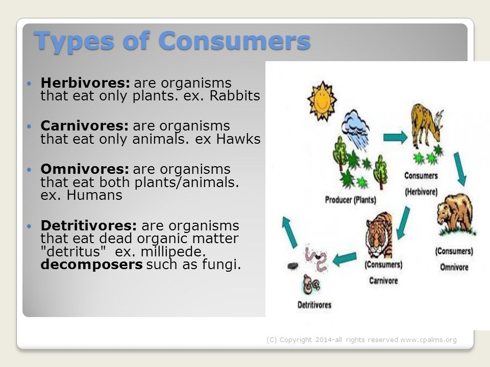 Types of Consumers Types of Consumers Herbivores: are organisms that eat only plants.
