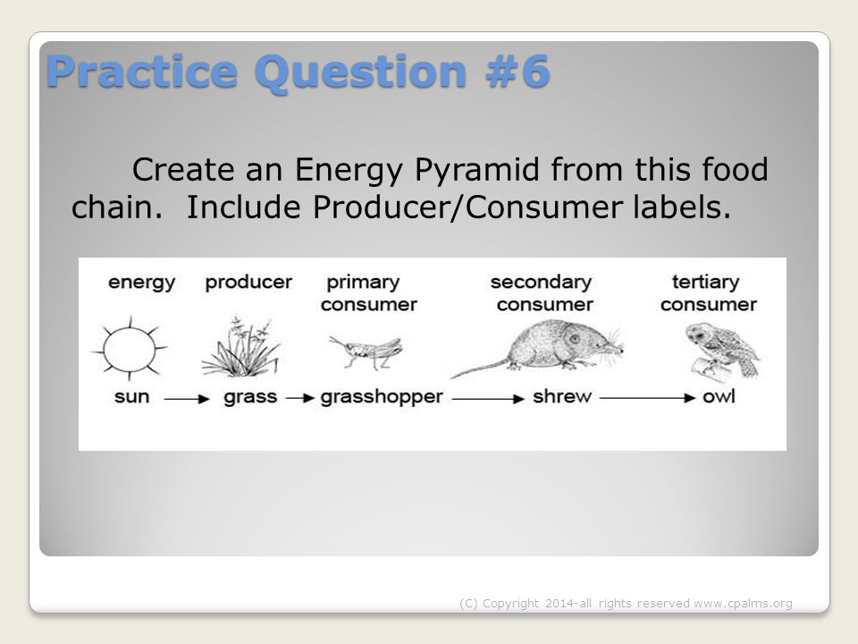 Practice Question #6 Create an Energy Pyramid from this food chain.