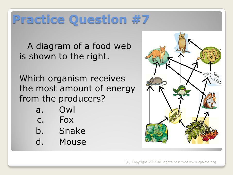 Practice Question #7 A diagram of a food web is shown to the right.