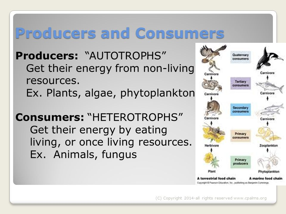 Producers and Consumers Producers: AUTOTROPHS Get their energy from non-living resources.
