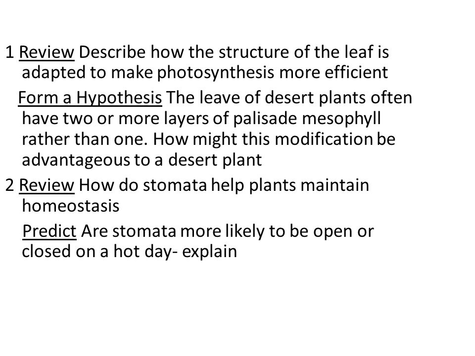 Open Stomata  Carbon dioxide can enter  Water is lost by transpiration.