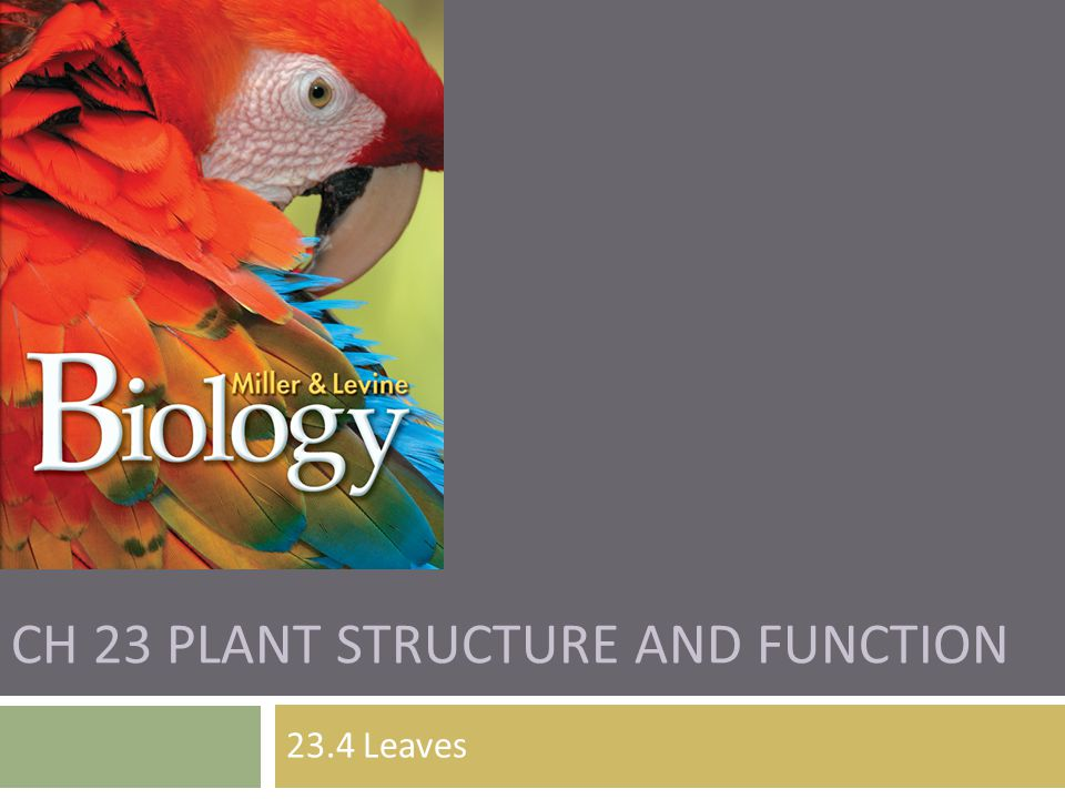 CH 23 PLANT STRUCTURE AND FUNCTION 23.4 Leaves