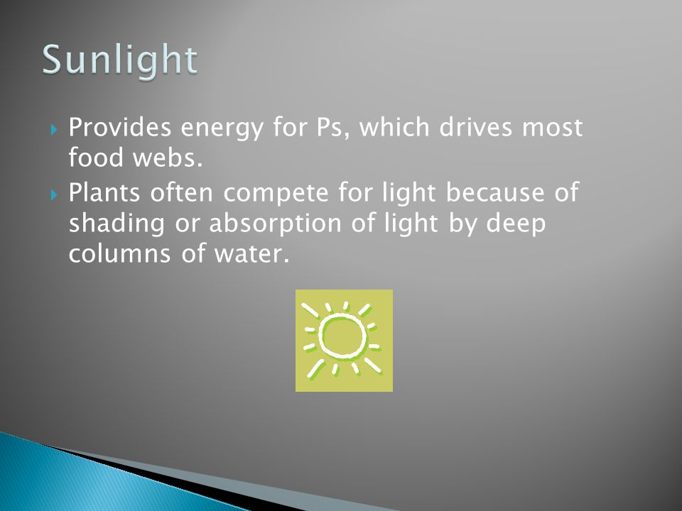  Provides energy for Ps, which drives most food webs.  Plants often compete for light because of shading or absorption of light by deep columns of w