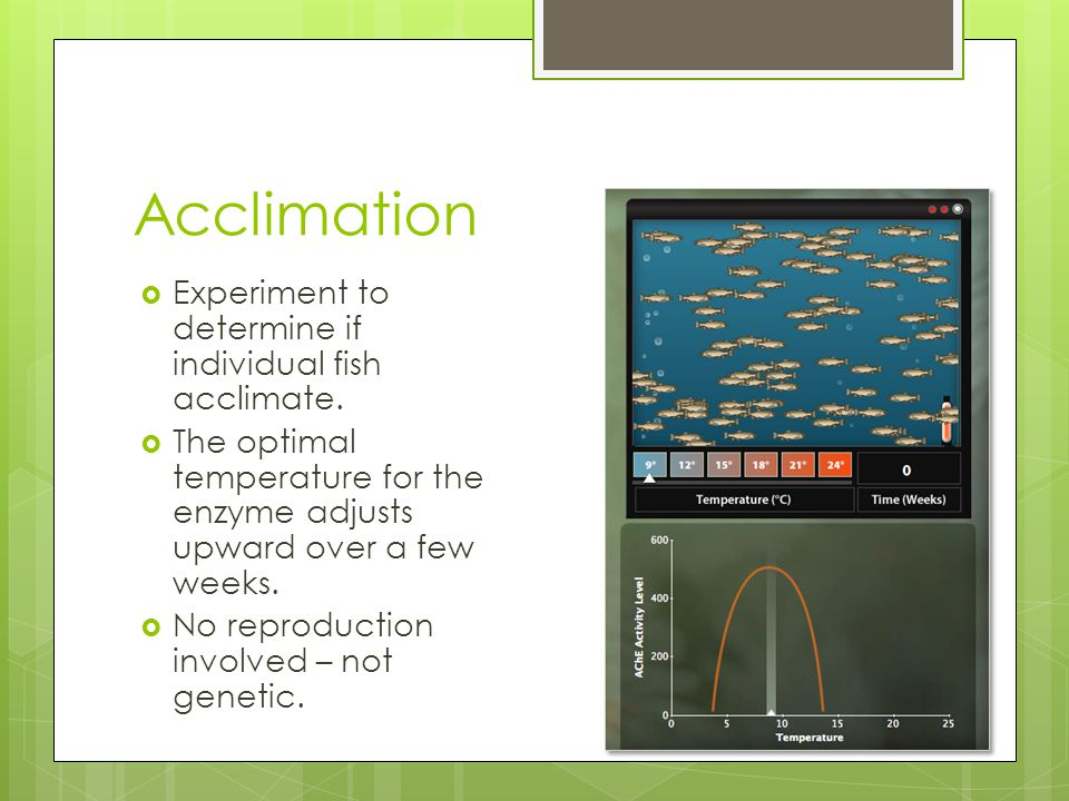 Acclimation  Experiment to determine if individual fish acclimate.