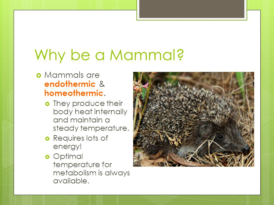 Why be a Mammal.  Mammals are endothermic & homeothermic.