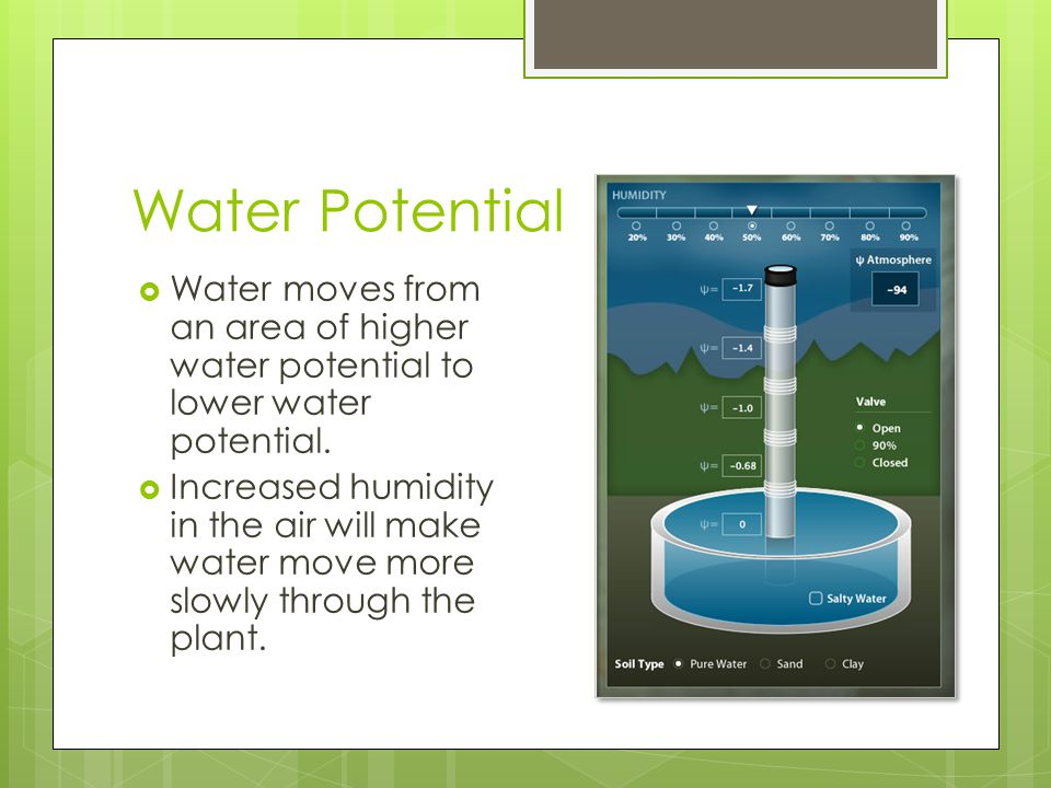Water Potential  Water moves from an area of higher water potential to lower water potential.