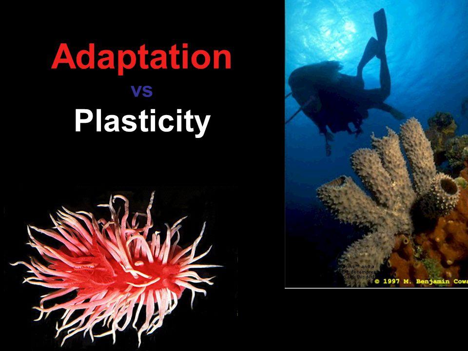 Adaptation vs Plasticity