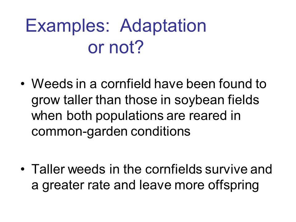 Weeds in a cornfield have been found to grow taller than those in soybean fields when both populations are reared in common-garden conditions Taller weeds in the cornfields survive and a greater rate and leave more offspring Examples: Adaptation or not
