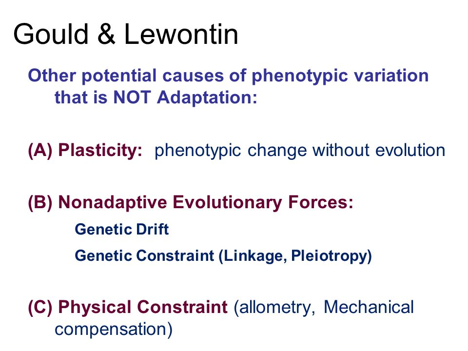 Gould & Lewontin Other potential causes of phenotypic variation that is NOT Adaptation: (A) Plasticity: phenotypic change without evolution (B) Nonadaptive Evolutionary Forces: Genetic Drift Genetic Constraint (Linkage, Pleiotropy) (C) Physical Constraint (allometry, Mechanical compensation)