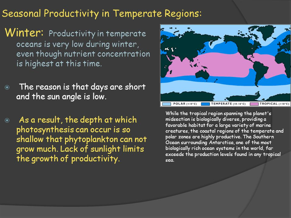 Seasonal Productivity in Temperate Regions: Winter: Productivity in temperate oceans is very low during winter, even though nutrient concentration is