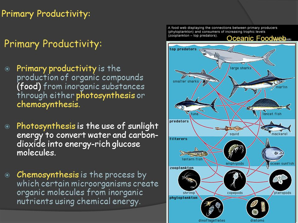 Primary Productivity:  Primary productivity is the production of organic compounds (food) from inorganic substances through either photosynthesis or