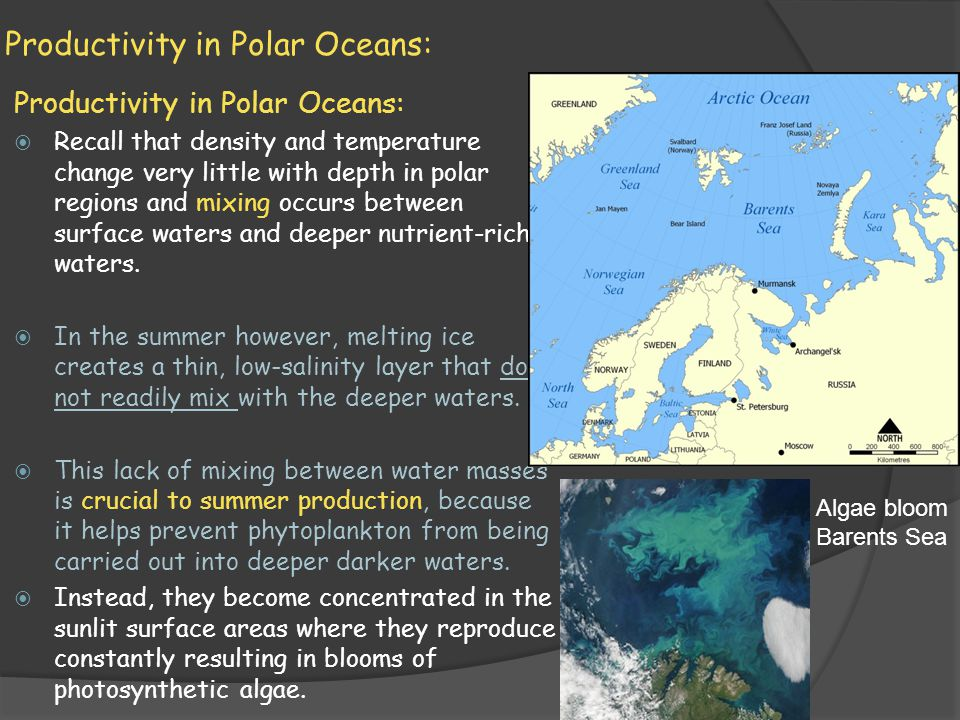 Productivity in Polar Oceans:  Recall that density and temperature change very little with depth in polar regions and mixing occurs between surface w