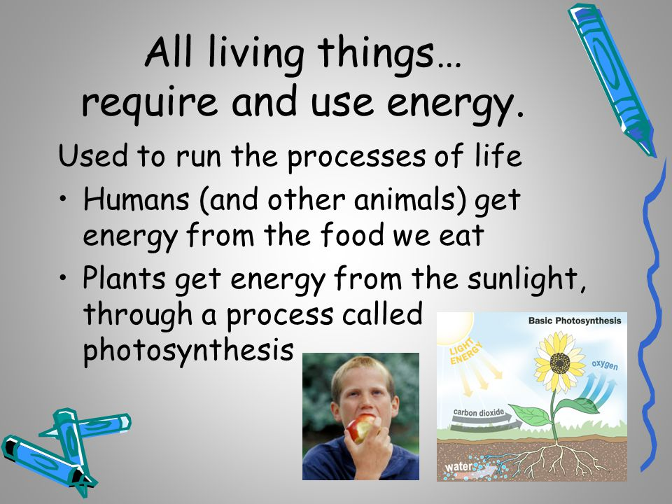 All living things… respond to stimuli.