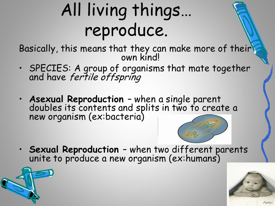 All living things… grow and develop Growth: addition of mass to an organism Development:the process that occurs in an organism s life that results in a more complex organism.
