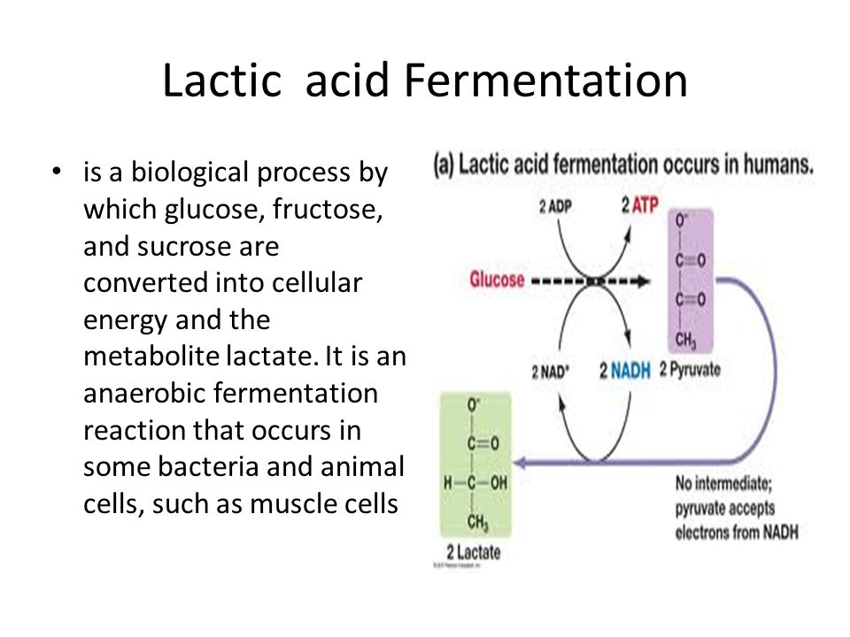 Lactic acid Fermentation is a biological process by which glucose, fructose, and sucrose are converted into cellular energy and the metabolite lactate