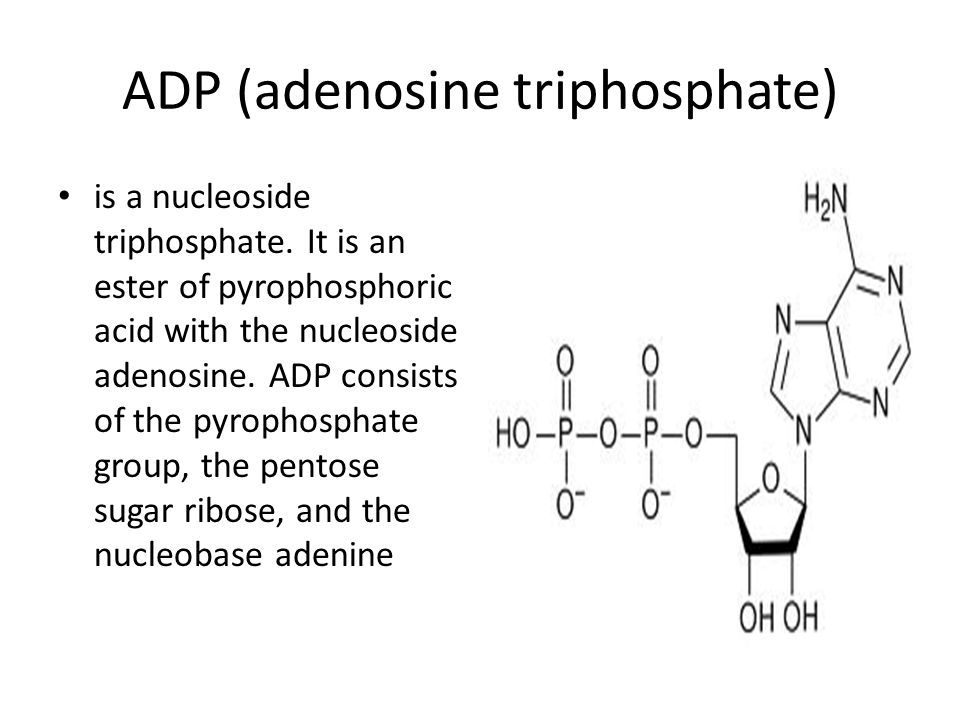 ADP (adenosine triphosphate) is a nucleoside triphosphate. It is an ester of pyrophosphoric acid with the nucleoside adenosine. ADP consists of the py