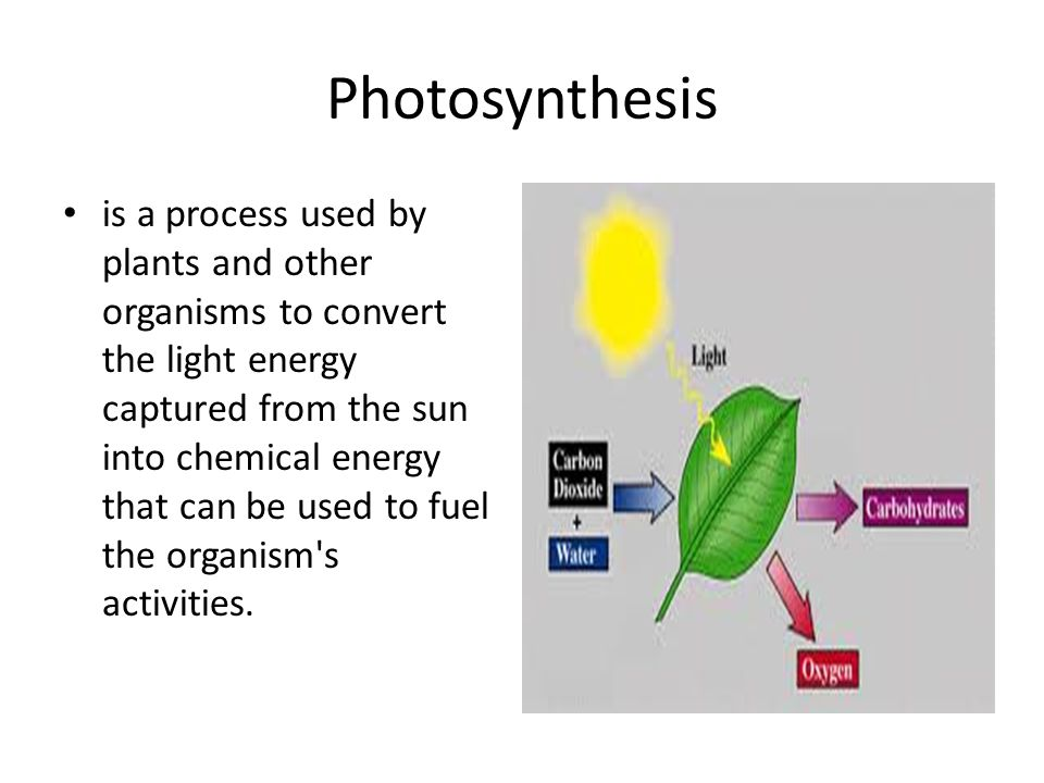 Photosynthesis is a process used by plants and other organisms to convert the light energy captured from the sun into chemical energy that can be used