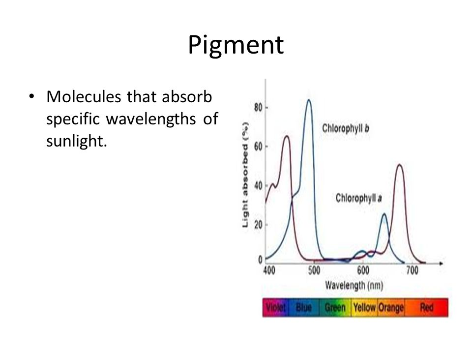 Pigment Molecules that absorb specific wavelengths of sunlight.