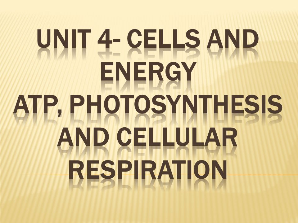  Produces molecules that carry energy to the second part.