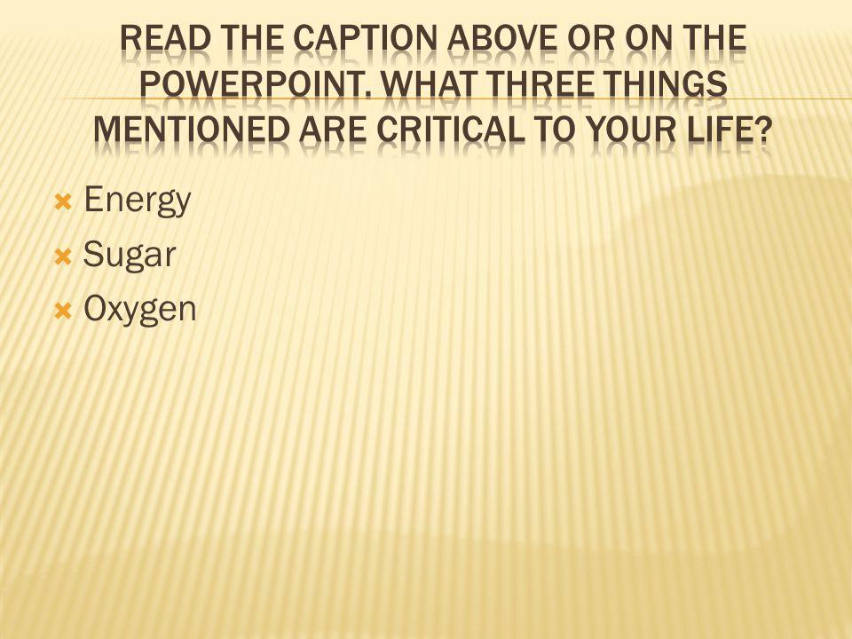  Energy  Sugar  Oxygen