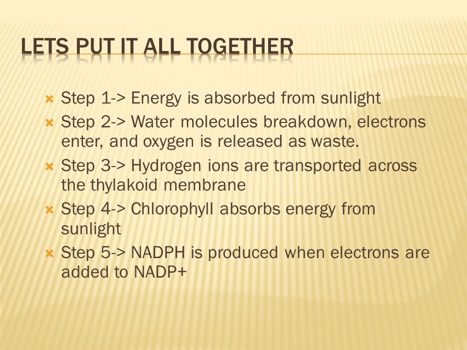  Step 1-> Energy is absorbed from sunlight  Step 2-> Water molecules breakdown, electrons enter, and oxygen is released as waste.  Step 3-> Hydroge