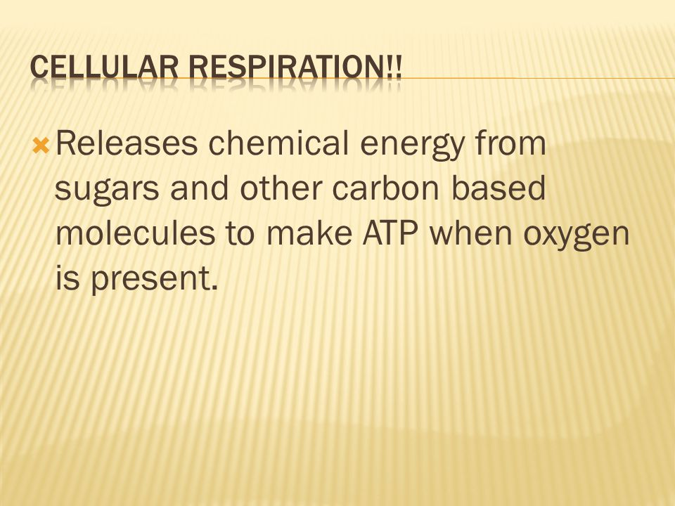  Releases chemical energy from sugars and other carbon based molecules to make ATP when oxygen is present.