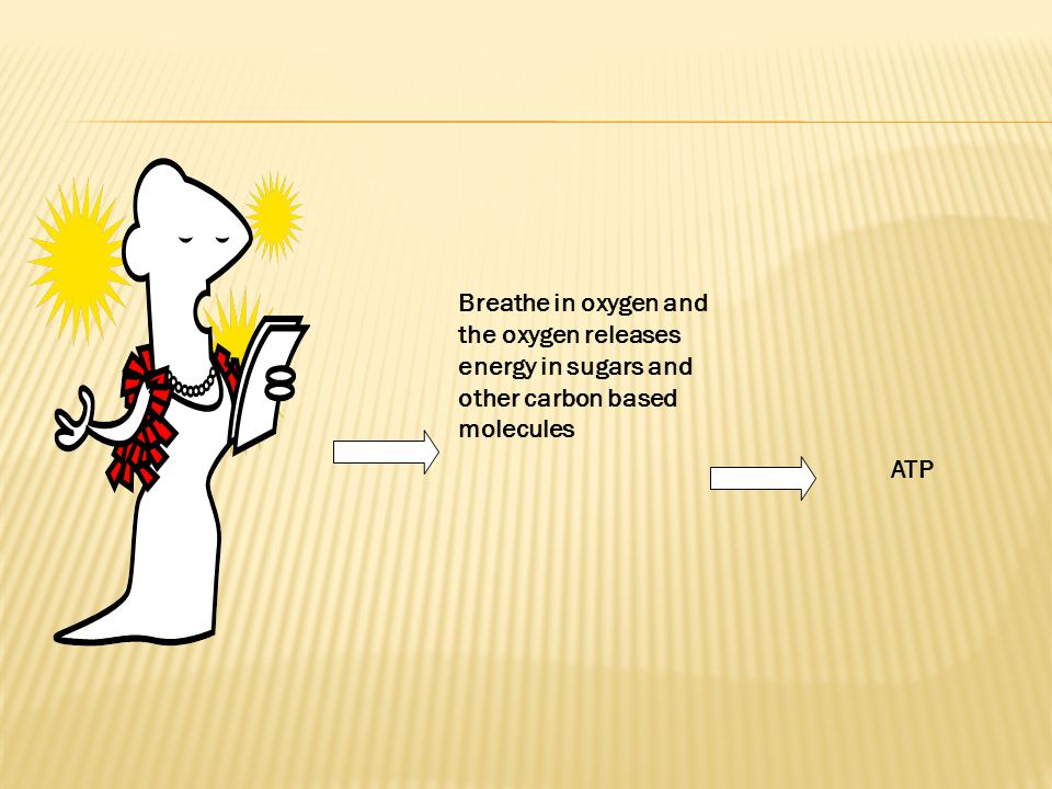 Breathe in oxygen and the oxygen releases energy in sugars and other carbon based molecules ATP