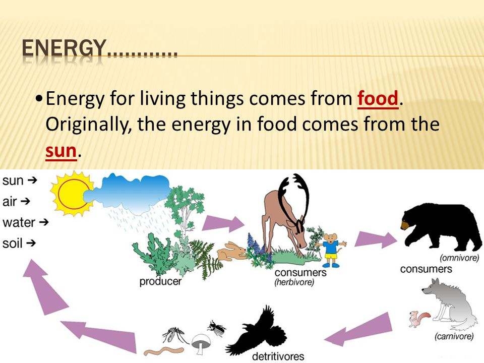 Energy for living things comes from food. Originally, the energy in food comes from the sun.