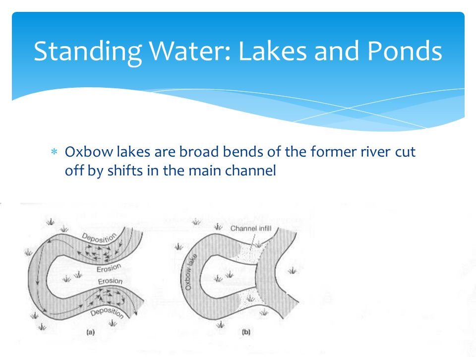  Oxbow lakes are broad bends of the former river cut off by shifts in the main channel Standing Water: Lakes and Ponds