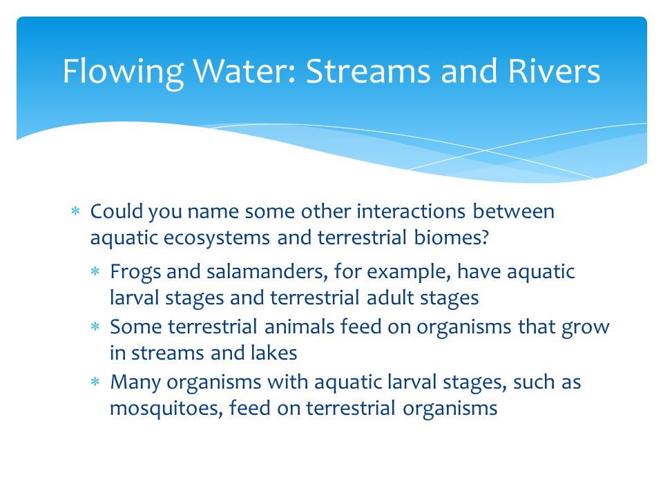  Could you name some other interactions between aquatic ecosystems and terrestrial biomes? Flowing Water: Streams and Rivers  Frogs and salamanders,