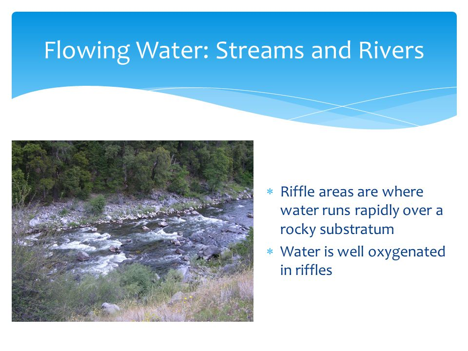  Riffle areas are where water runs rapidly over a rocky substratum  Water is well oxygenated in riffles Flowing Water: Streams and Rivers