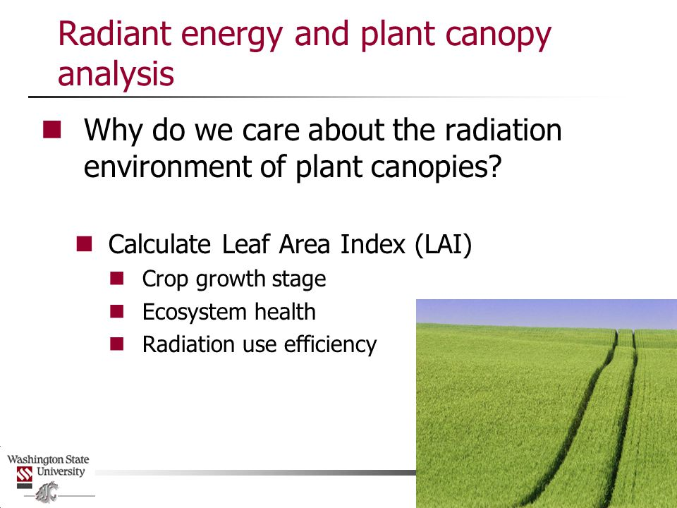 Radiant energy and plant canopy analysis Must have detailed knowledge of light environment to use photosynthesis models Partitioning ET into E and T Need to know fraction of energy intercepted by canopy and fraction transmitted to soil