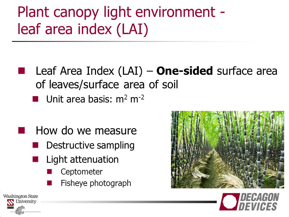 Plant canopy light environment - leaf area index (LAI) Leaf Area Index (LAI) – One-sided surface area of leaves/surface area of soil Unit area basis: m 2 m -2 How do we measure Destructive sampling Light attenuation Ceptometer Fisheye photograph