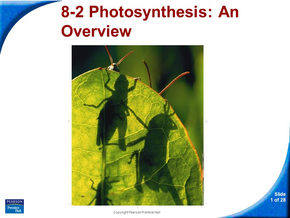 Slide 12 of 28 8-2 Photosynthesis: An Overview Copyright Pearson Prentice Hall Light and Pigments Light is a form of energy, so any compound that absorbs light also absorbs energy from that light.