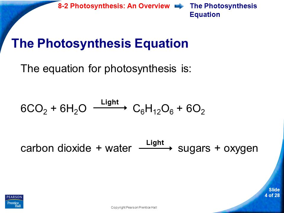 Slide 5 of 28 8-2 Photosynthesis: An Overview Copyright Pearson Prentice Hall The Photosynthesis Equation Photosynthesis uses the energy of sunlight to convert water and carbon dioxide into high-energy sugars and oxygen.