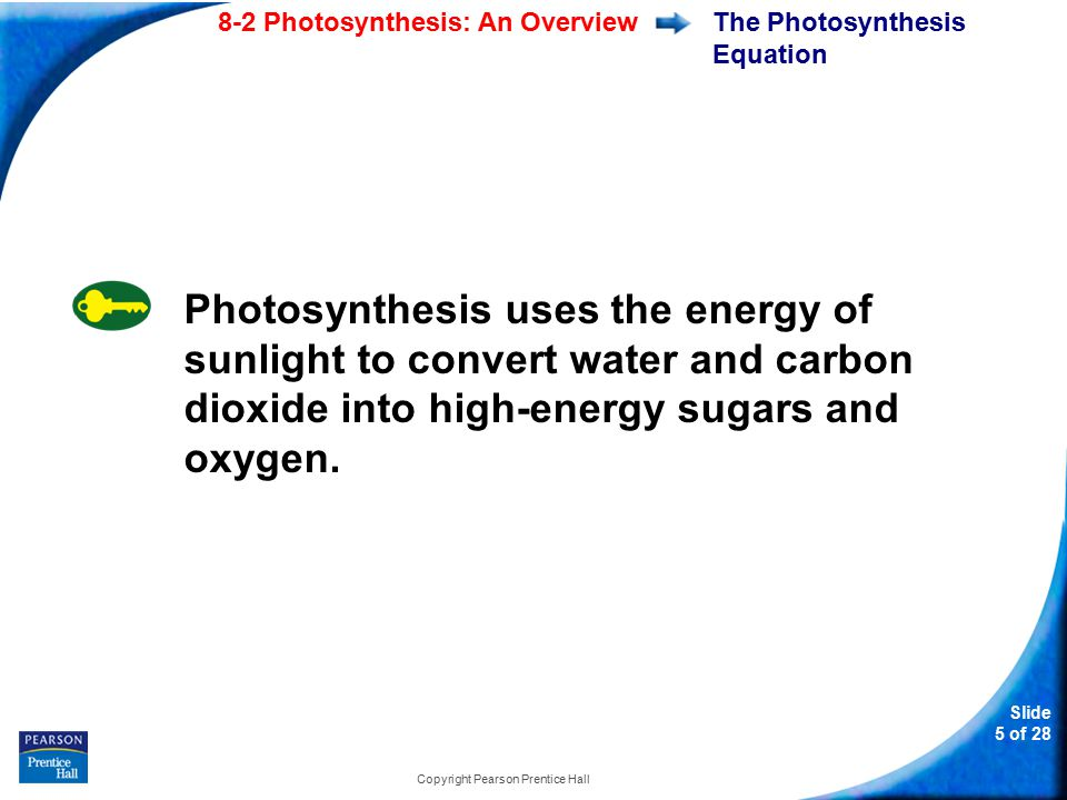 Slide 16 of 28 Copyright Pearson Prentice Hall 8-2 The principal pigment in plants is a.chloroplast.