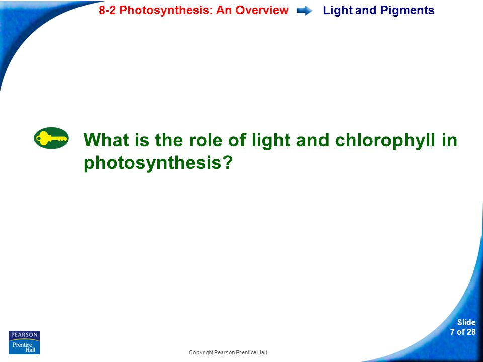 Slide 8 of 28 8-2 Photosynthesis: An Overview Copyright Pearson Prentice Hall Light and Pigments How do plants capture the energy of sunlight.