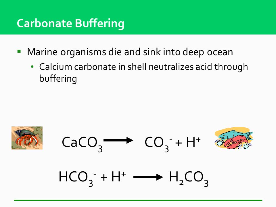 Carbonate Buffering  Keeps ocean pH about same (8.1)  pH too high, carbonic acid releases H+  pH too low, bicarbonate combines with H+ H 2 CO 3 H + + HCO 3 - HCO 3 - + H + H 2 CO 3