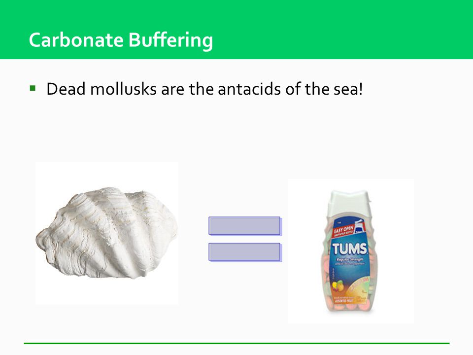 Carbonate Buffering  Marine organisms die and sink into deep ocean Calcium carbonate in shell neutralizes acid through buffering CaCO 3 CO 3 - + H + HCO 3 - + H + H 2 CO 3