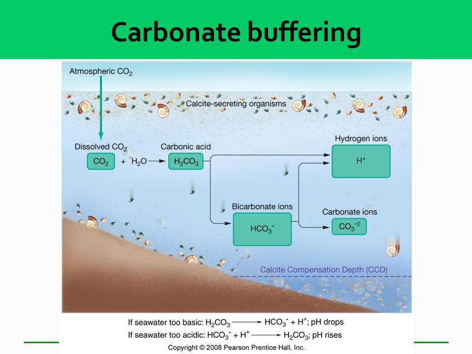 Carbonate Buffering  Dead mollusks are the antacids of the sea!