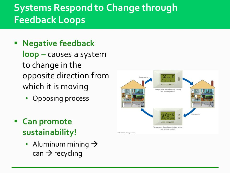 Systems Respond to Change through Feedback Loops  Positive feedback loop - causes a system to change in the same direction