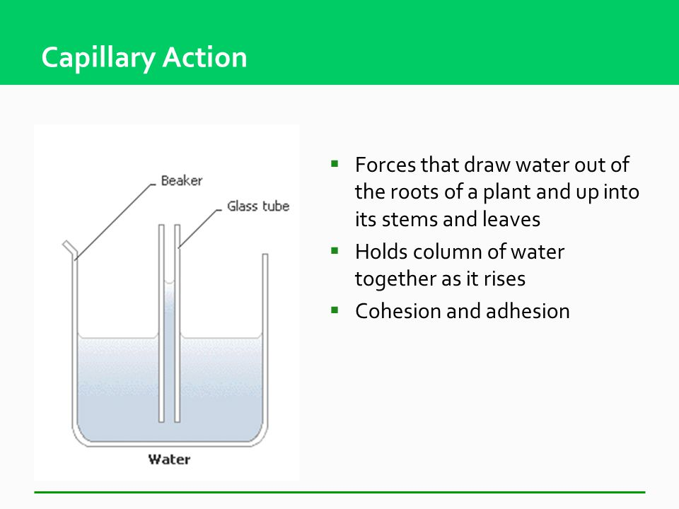 Adhesion  Attraction between molecules of different substances Meniscus Water to WaterWater to Glass