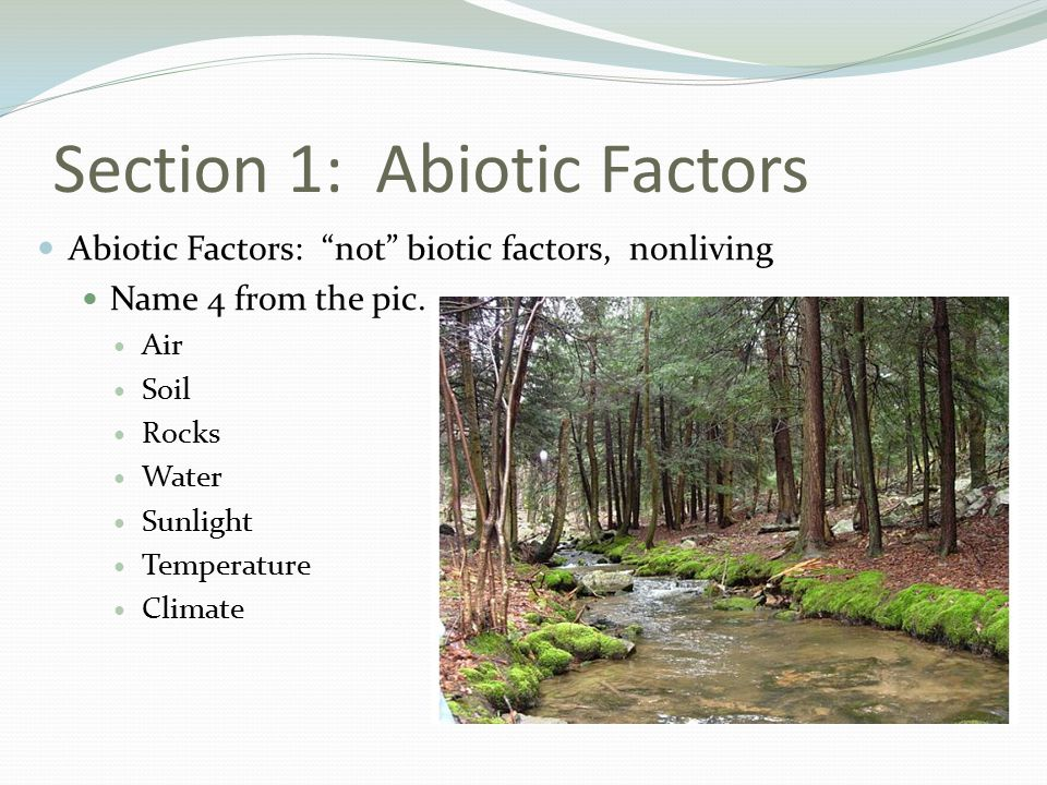 Section 1: Abiotic Factors Abiotic Factors: not biotic factors, nonliving Name 4 from the pic.
