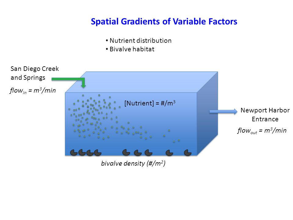 San Diego Creek and Springs Newport Harbor Entrance Spatial Gradients of Variable Factors Nutrient distribution Bivalve habitat flow out = m 3 /min [Nutrient] = #/m 3 bivalve density (#/m 2 ) flow in = m 3 /min
