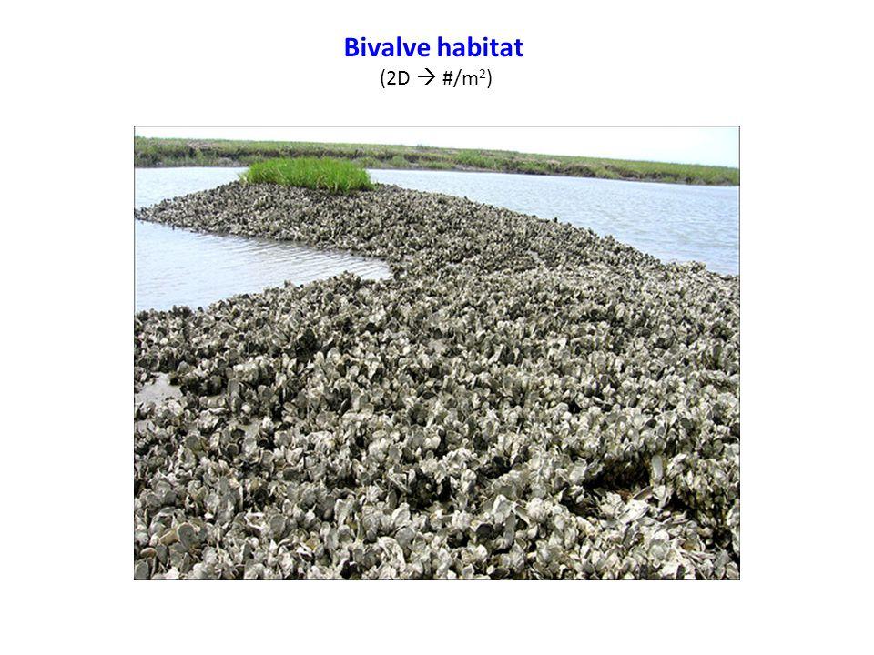 Bivalve habitat (2D  #/m 2 )