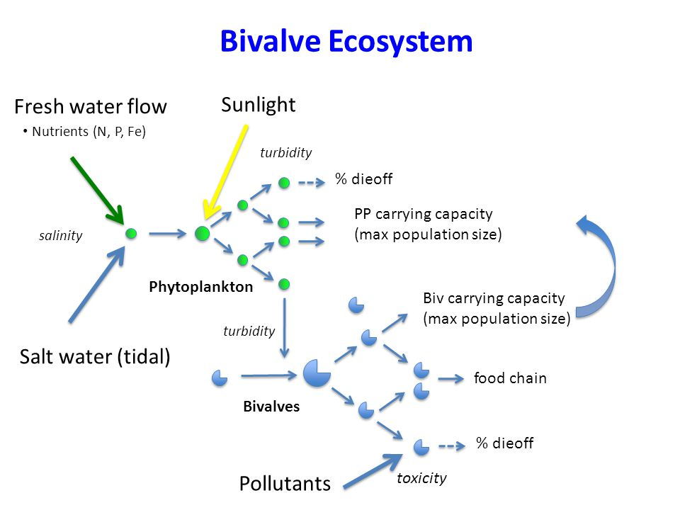 Bivalve Ecosystem Nutrients (N, P, Fe) Fresh water flow Sunlight Salt water (tidal) Phytoplankton % dieoff PP carrying capacity (max population size) Biv carrying capacity (max population size) % dieoff food chain Bivalves turbidity salinity turbidity Pollutants toxicity