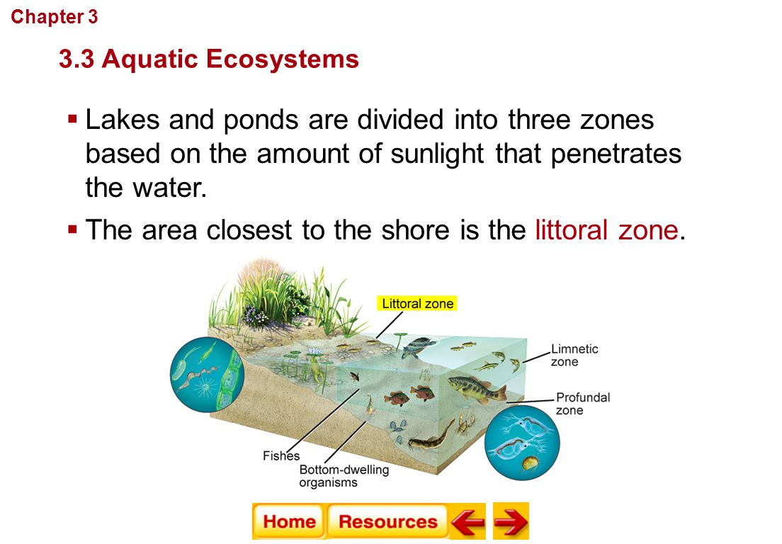  Lakes and ponds are divided into three zones based on the amount of sunlight that penetrates the water. Communities, Biomes, and Ecosystems  The ar