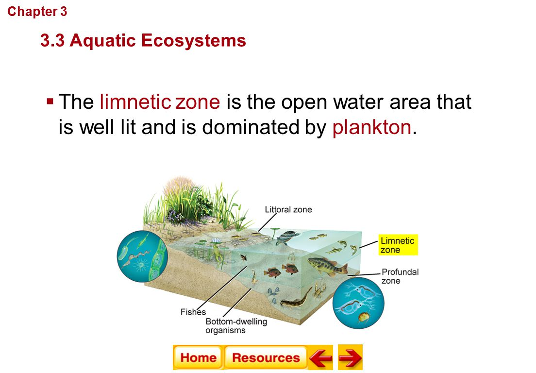  The limnetic zone is the open water area that is well lit and is dominated by plankton. Communities, Biomes, and Ecosystems 3.3 Aquatic Ecosystems C